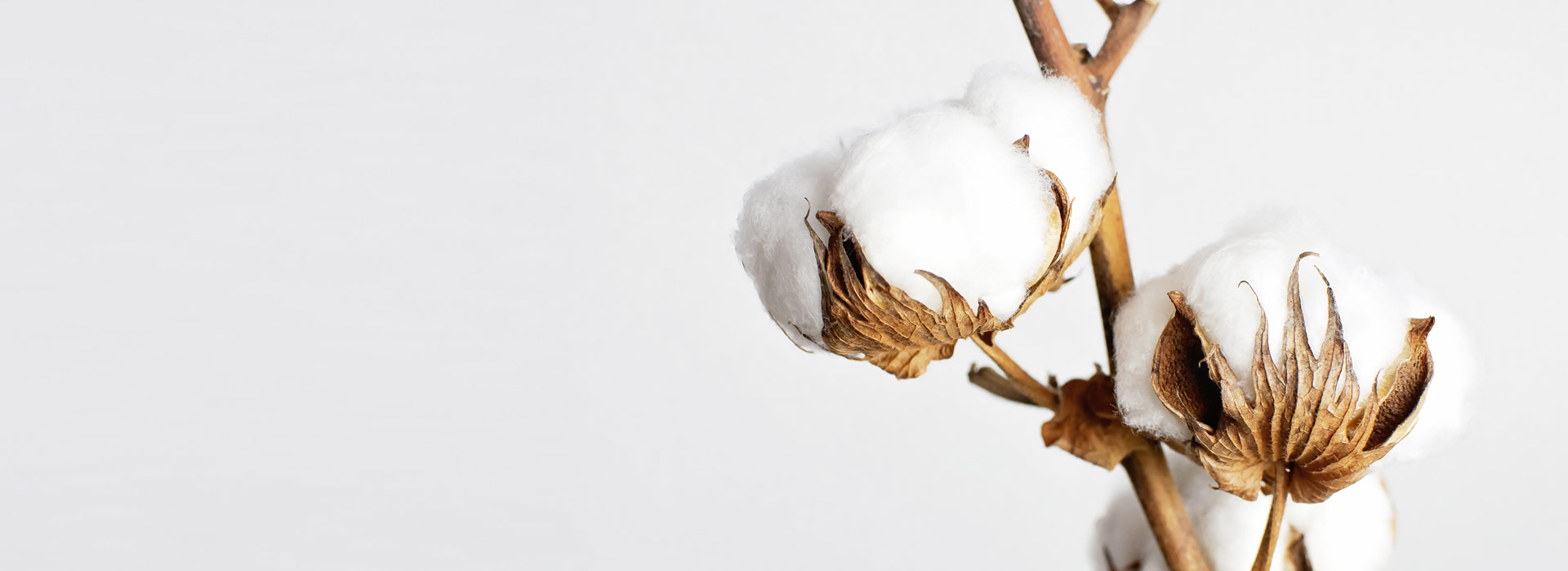 Sustainable clothing from organic and cruelty-free materials